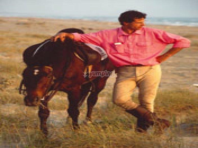 Vita a cavallo