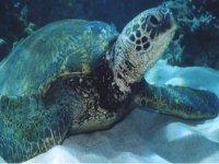 Magnifiche tartarughe
