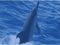 Saluto del delfino