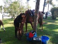 Ci prendiamo cura dei nostri cavalli