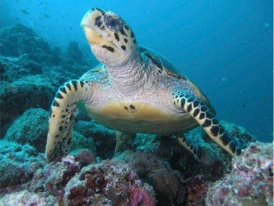 Sea World Travel & Diving srl