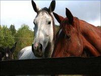 Cavalli meravigliosi