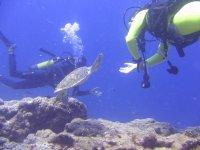 immersione con tartarughe