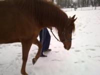 Scoprendo la neve a cavallo