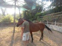 Tondo e cavallo