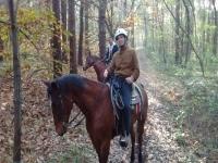 Guide equestri