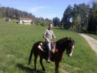 Un bel cavallo al galoppo