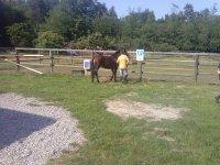 Insegnare al cavallo