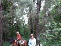 escursione a cavallo nel bosco
