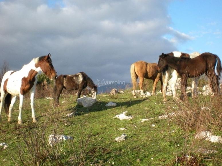 Escursione a cavallo vicino Salerno