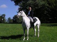 A cavallo nel verde