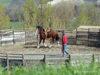 addestramento per cavalli