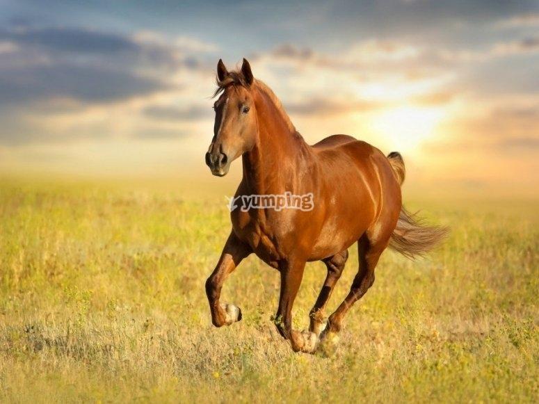 Cavalli e libertà