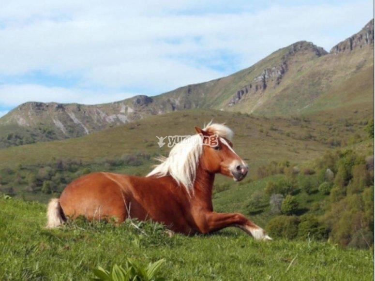 Cavallo a riposo nella natura