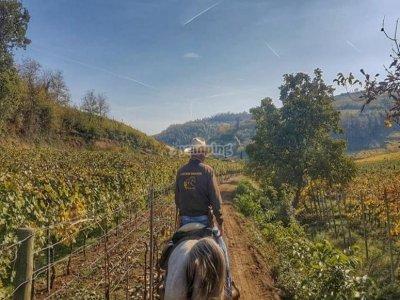 Tour a cavallo a Verona di 1 giornata intera
