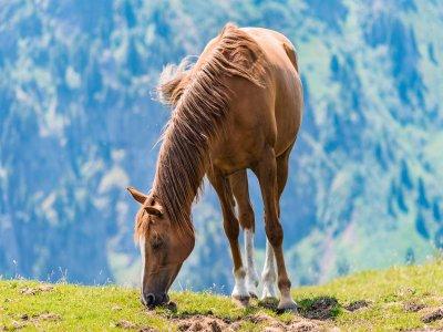 Tour a cavallo con pranzo a Verona di 1 giornata