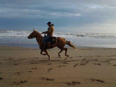 Escursione a cavallo da una giornata con spuntino