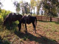 I nostri cavalli