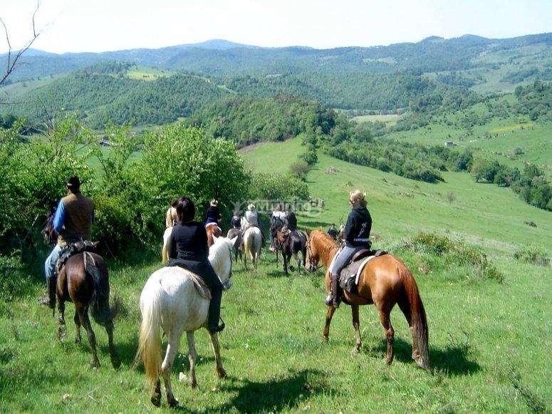 Cavalli e natura