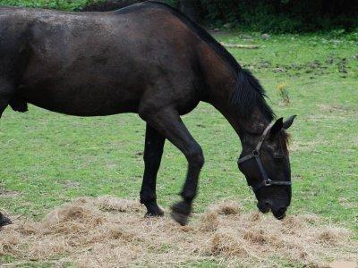 Tour a cavallo metà giornata con degustazione