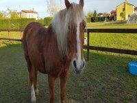 Un cavallo dolcissimo
