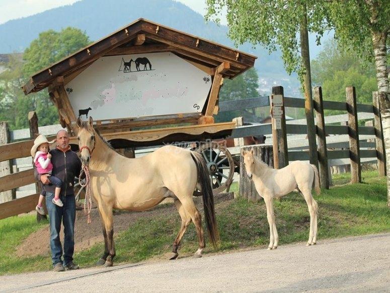 Alcuni cavalli del nostro maneggio