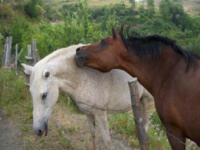 Passeggiata a cavallo a Baselga di Piné di 2 ore