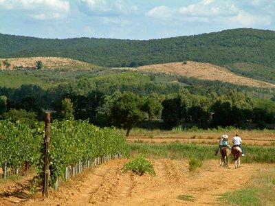 Percorso a cavallo a Baselga di Piné di 3 ore