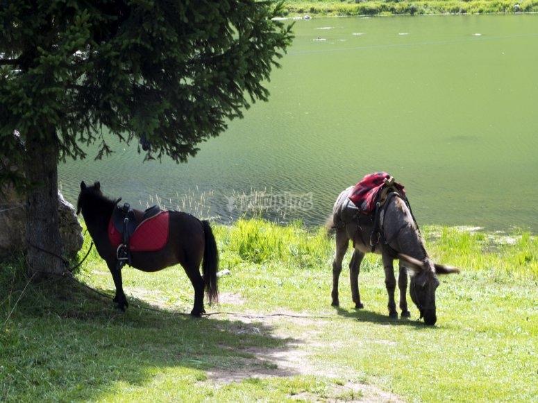 A riposo vicino al lago