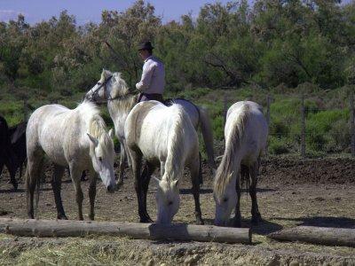 Passeggiata a cavallo 1 giornata Baselga di Piné