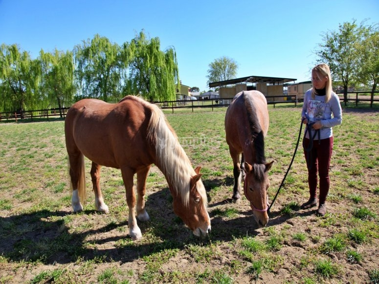 I cavalli nel nostro maneggio