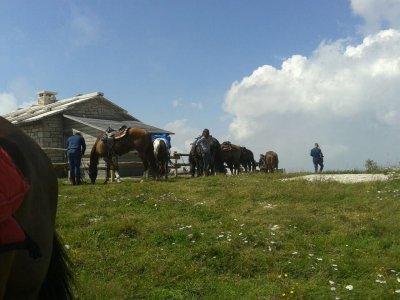 Escursione a cavallo Baselga di Piné metà giornata