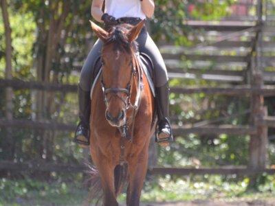 Gita a cavallo a Monteforte d'Alpone con pranzo
