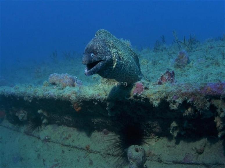 Meraviglie sottomarine
