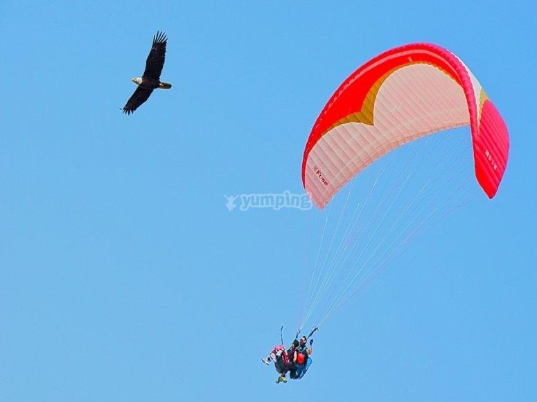 ti sentirai libero come un uccello!
