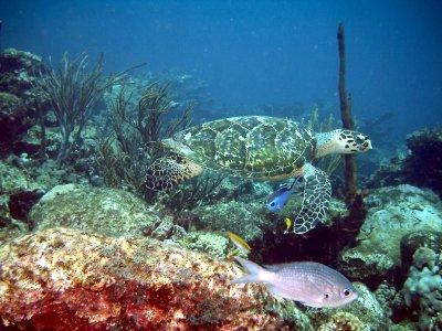 Scuba diving in Crotone
