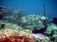 The magical marine fauna!