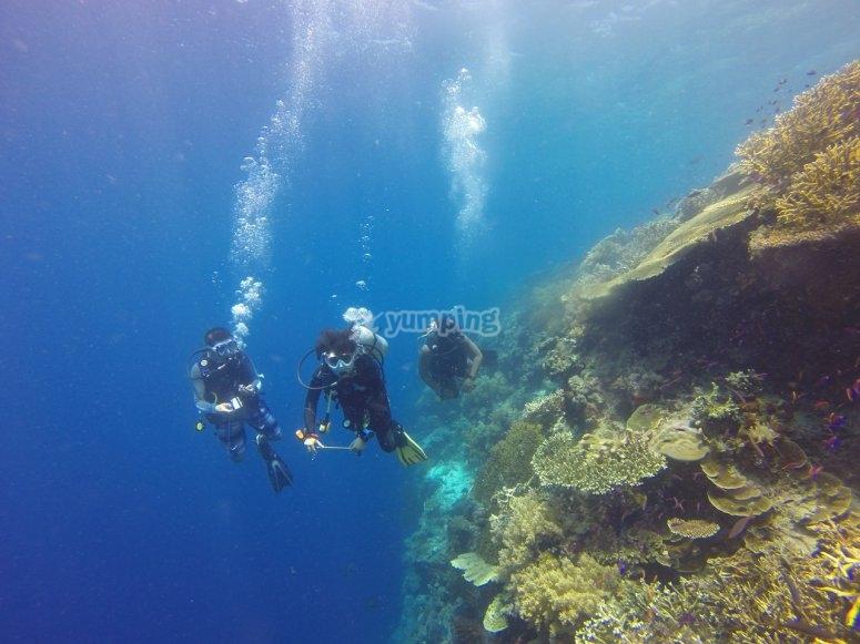 diving together!