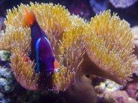 the fantastic marine fauna