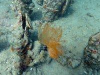 Forme di vita sottomarina