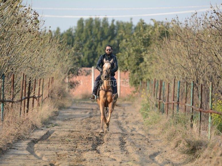 on horseback in the fields