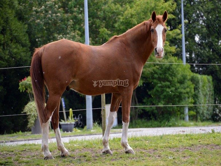 a magnificent horse