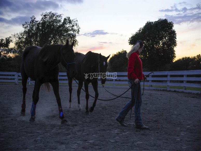 our horses at the end of the day