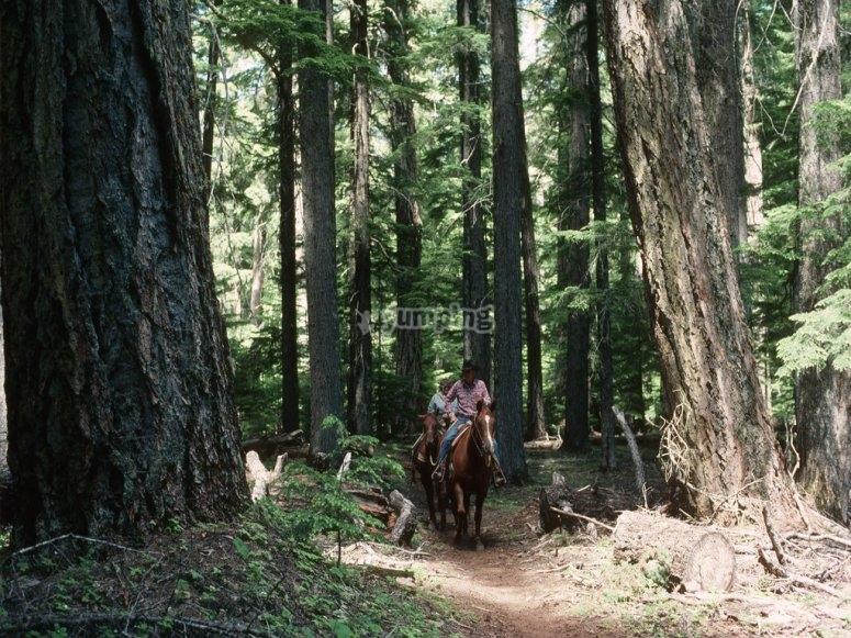 On horseback in the woods!