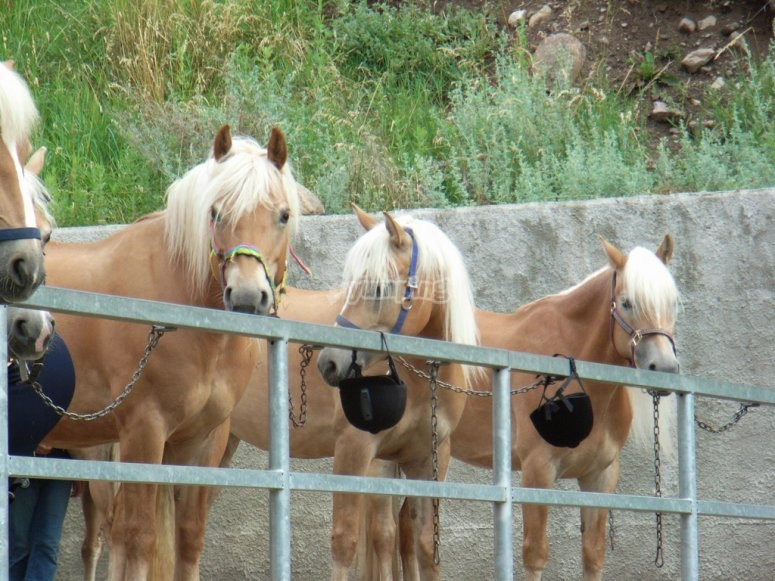 The horses ready for the riding lesson