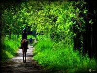 In mezzo al verde con il nostro cavallo