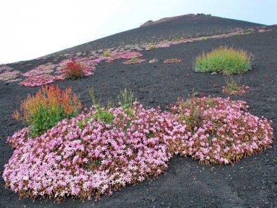 Etna People s.n.c.
