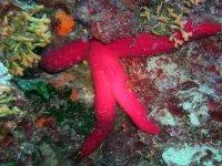 Marine specimens