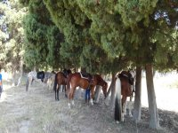 cavalli in sosta