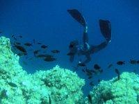 Immersioni nell arcipelago toscano